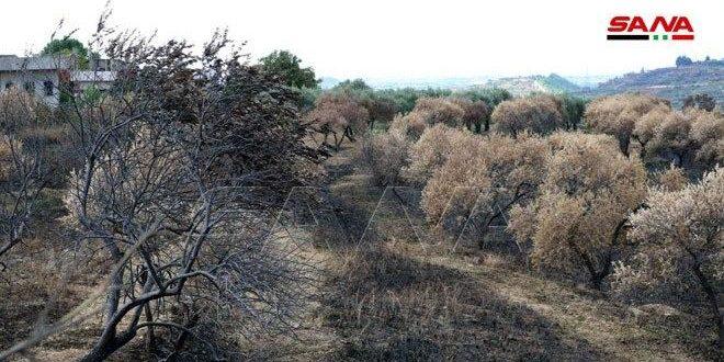 (اكساد) يقدم مئة مليون ليرة لمساعدة المزارعين المتضررين من الحرائق الأخيرة