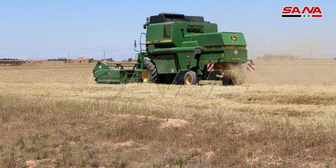 Harvesting 341 thousand hectares cultivated with wheat and barley in Hasaka