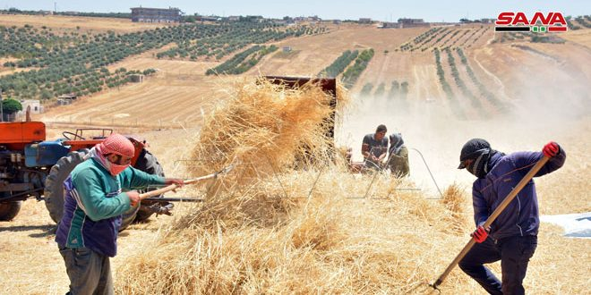Farmers implement the entire cultivation plan for all crops in Homs northern countryside