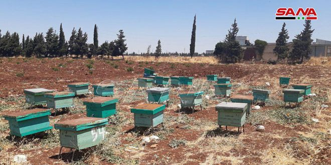 Hama production of honey estimated at 250 tons for current season