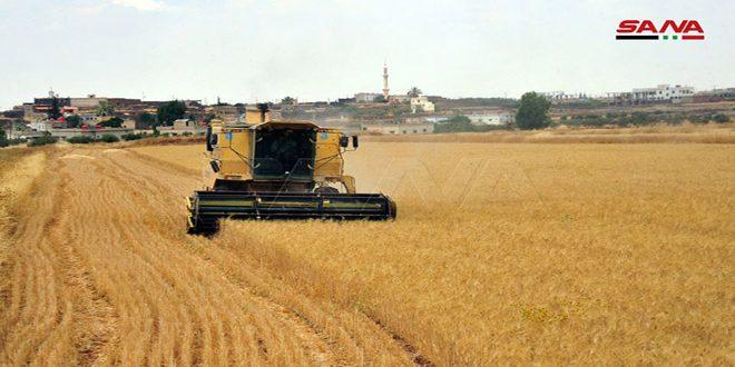 Pese a los actos de sabotaje, avanza a buen ritmo la cosecha de trigo y cebada en Hasakeh, Siria