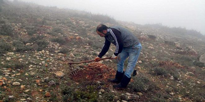 کاشت ۵ هزار اصله نهال توسط یک خلبان سوری مجروح