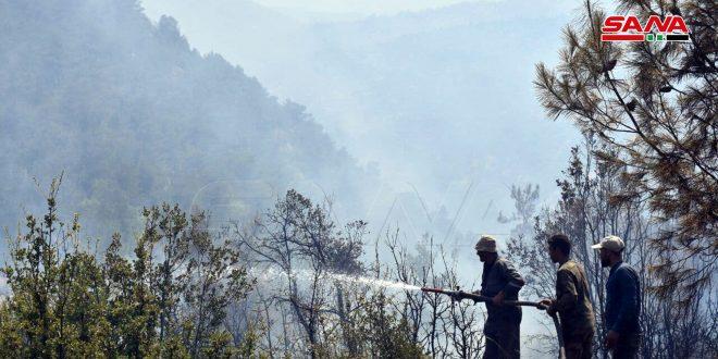 مهار آتش سوزی در روستای اکوم در حومه القصیر.. وزیر کشاورزی: این آتش سوزی موجب آسیب به پوشش گیاهی شد