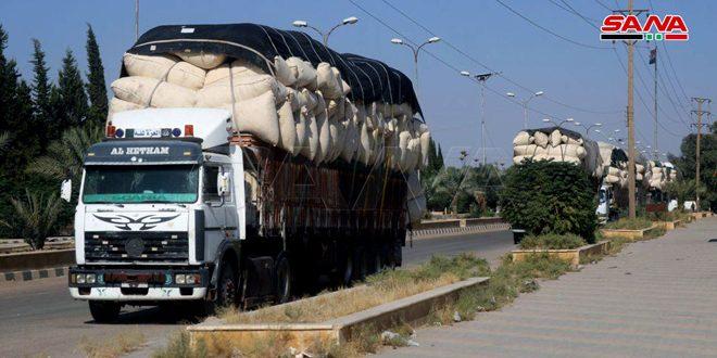 Début de la commercialisation du coton dans le gouvernorat de Deir Ezzor