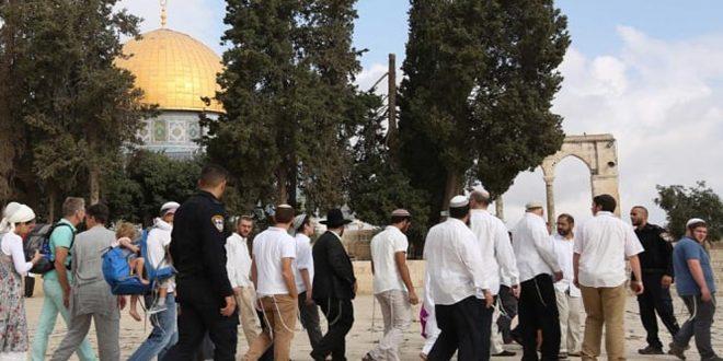 מתנחלים ישראלים מחדשים פריצתם למסגד אל-אקצה בשמירתם של כוחות הכיבוש