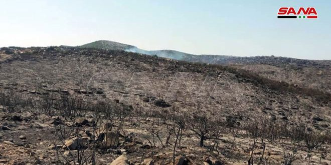 Управление лесного хозяйства: Площадь лесных пожаров в районах Масьяф и Аль-Габ составила более 3 000 гектаров
