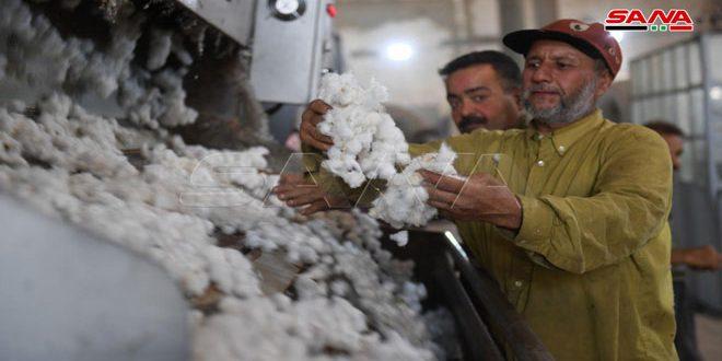 В Алеппо продолжают принимать урожай хлопка-сырца, в том числе из провинций Ракка и Дейр-эз-Зор