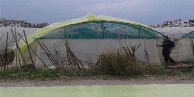 الإجراءات الاحترازية في طرطوس تحد من أضرار موجة الصقيع على الزراعات المحمية