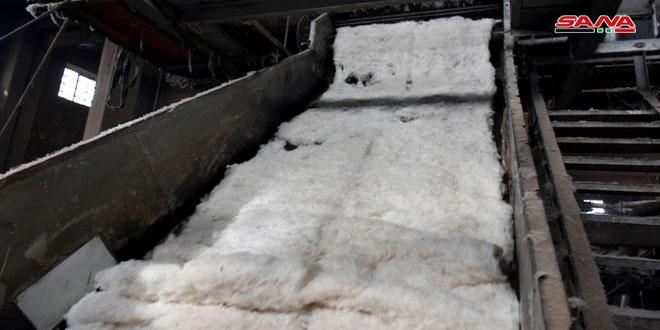 حماة: محلج العاصي يورد أكثر من 9 آلاف طن من بذور القطن لشركات الزيوت