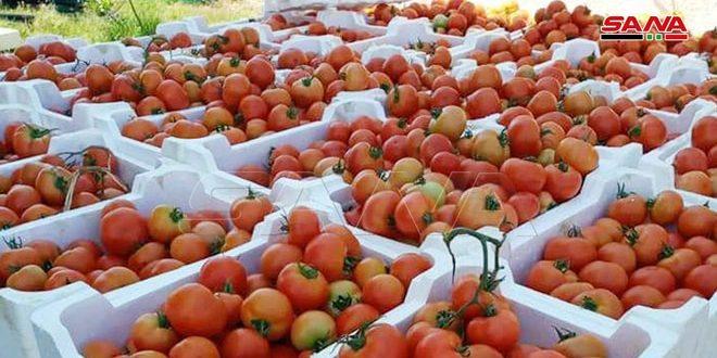 تسويق نحو 40 طناً من المنتجات الزراعية من سهل عكار إلى ريف دمشق والقنيطرة وطرطوس