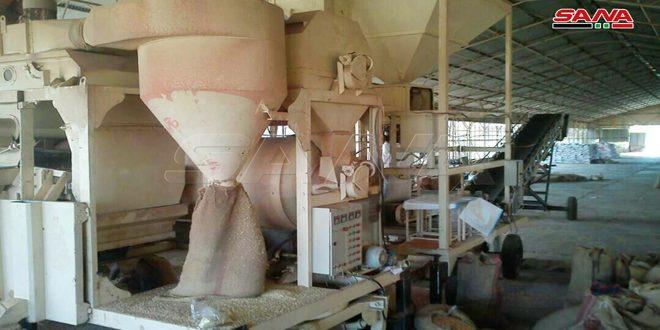 إكثار بذار حمص ينهي استعداداته لاستلام محصول القمح