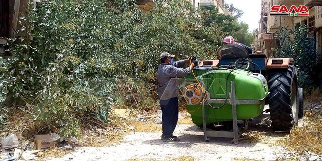 استجابة لما نشرته سانا… زراعة تدمر تبدأ باتخاذ التدابير لمنع انتشار شجرة التبغ الأزرق الضارة