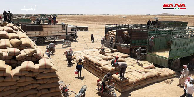 بذار حماة: صرف أكثر من 11 مليار ليرة من قيم محصول القمح المستلم من الحقول الإكثارية