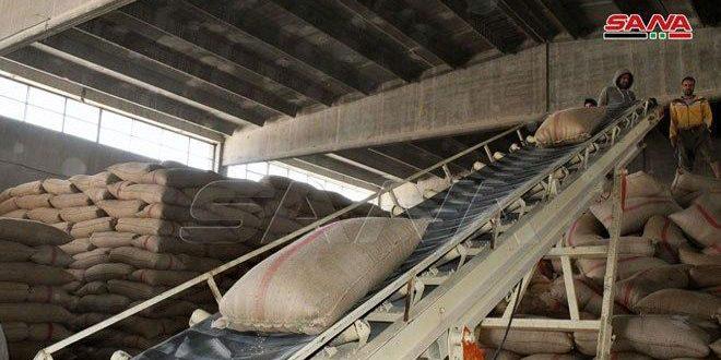 346 طناً كمية القمح المسلمة لشركة تجفيف البصل والخضار في سلمية