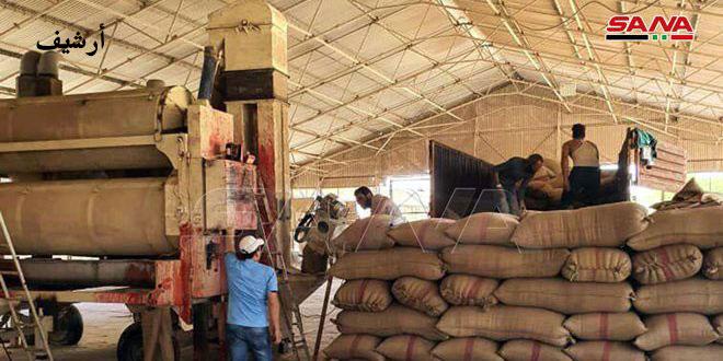 السورية للحبوب: استمرار عملية استلام القمح وإنشاء ثلاث مطاحن حديثة في دير الزور والرقة والحسكة