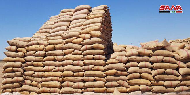 إكثار البذار تستلم 74.5 ألف طن من القمح الإكثاري في 8 مراكز