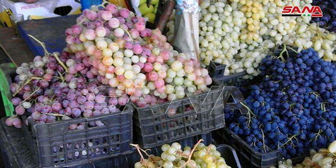 تقديرات بإنتاج نحو 2800 طن من ثمار العنب للموسم الحالي بالقنيطرة