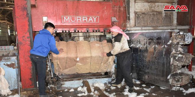 حماة: محلج محردة يبدأ حلج الأقطان المحبوبة الواردة من خارج المحافظة