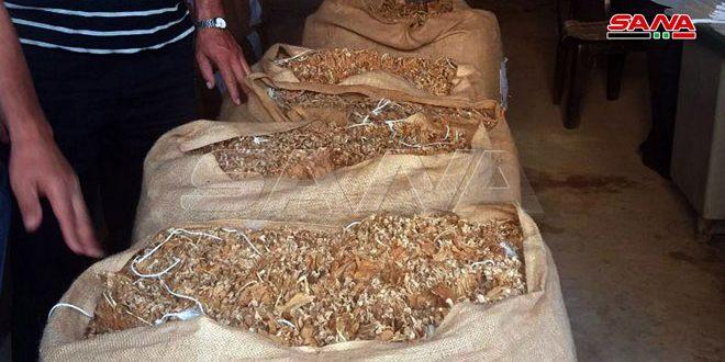 بدء استلام محصول التبغ من المزارعين بريف حمص الغربي