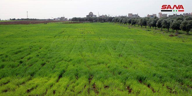 أكثر من 54 بالمئة نسبة تنفيذ خطة زراعة الشعير في درعا حتى الآن
