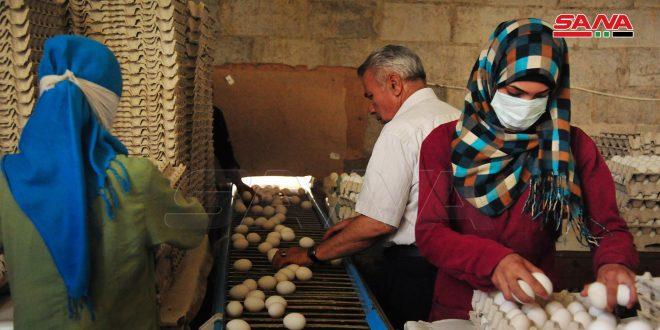 أهالي الدريج بريف دمشق يتوسعون بمشاريع المداجن ويؤمنون أكثر من 500 ألف بيضة يومياً للسوق المحلية