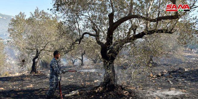 إخماد حريق حراج قرية اسقبولة بريف طرطوس